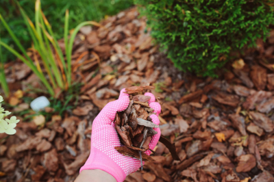 when to mulch landscape