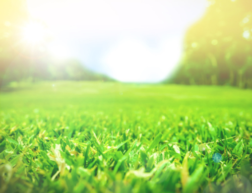Our Top Tips for Creating a Healthy Lawn That's Easy to Care For