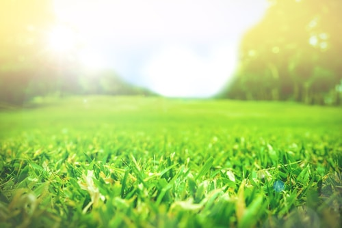 lawn care Long Island New York