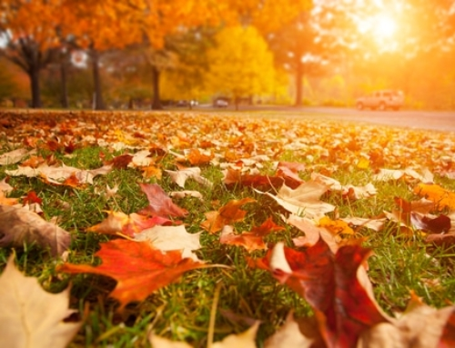An Overview of Lawn Care in Autumn