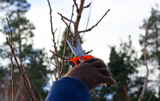commercial landscape design tree pruning NY