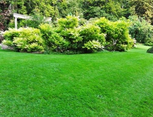 Tips for Greener Grass