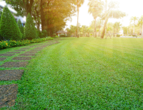 Steps To Keeping Your Lawn Healthy When Summer Heats Up