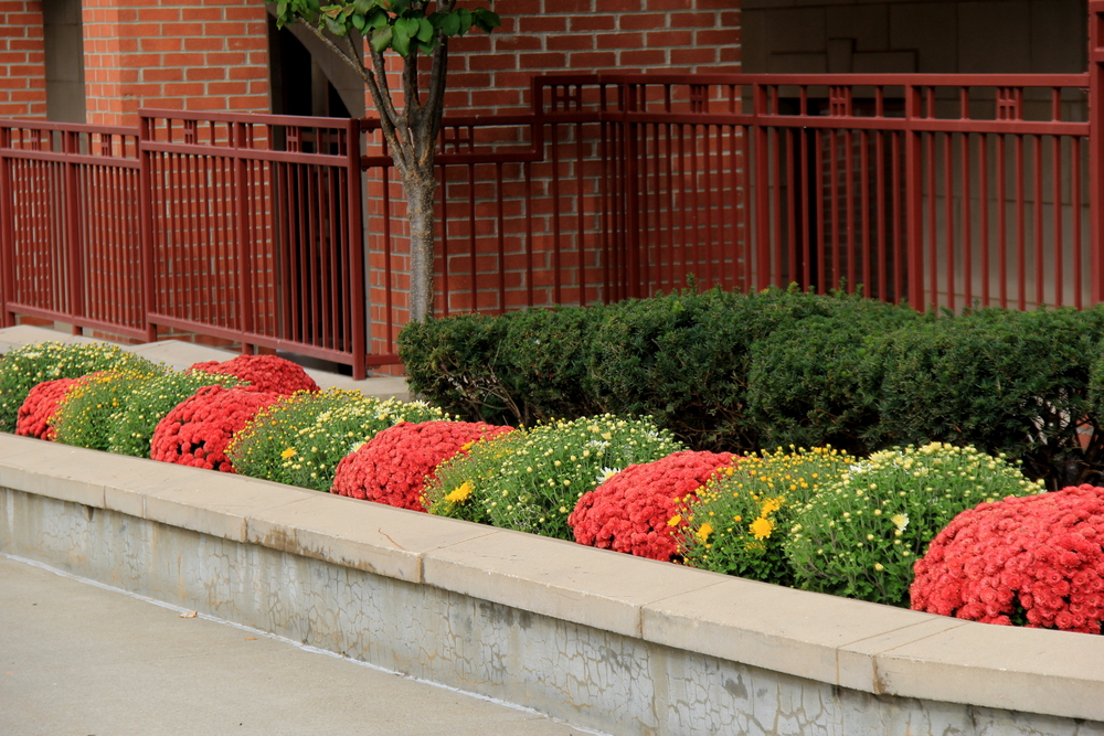 commercial property curb appeal landscape irrigation maintenance contractor nassau county ny