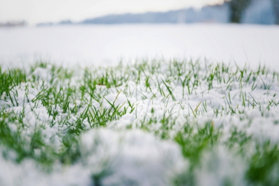 mowing the lawn landscape maintenance in the winter season