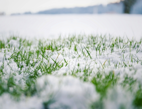Should I Mow My Lawn in Winter?
