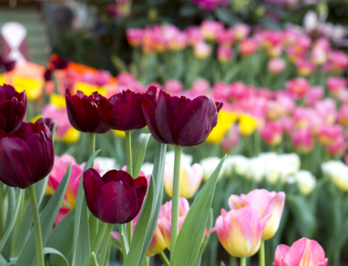 Brighten Up Your Winter With Bulbs