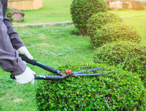 What Services Does a Lawn Care Company Offer