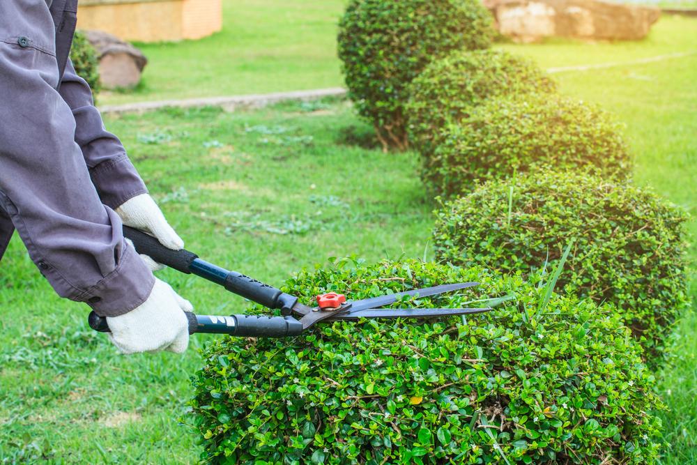 landscape maintenance service nassau county