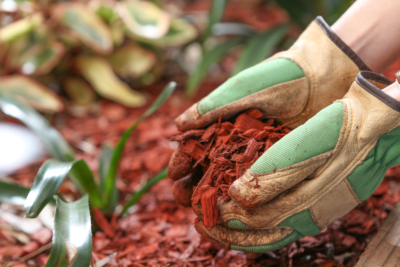 commercial landscape contractor company nyc mulch tips