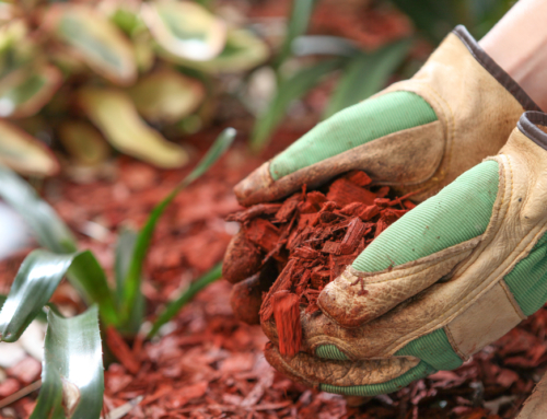 When to Mulch in the Spring