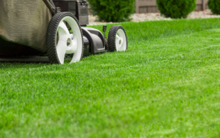commercial residential lawn care professional contractor nyc