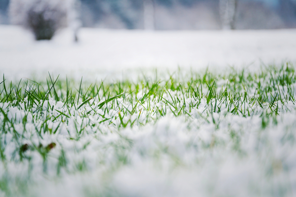 winter landscaping tips - nassau county nyc