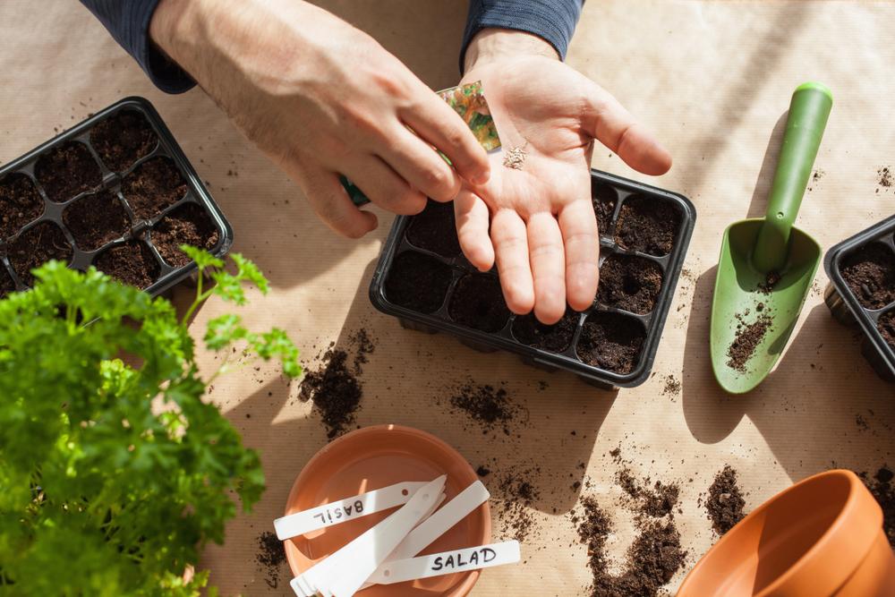indoor-gardening-tips